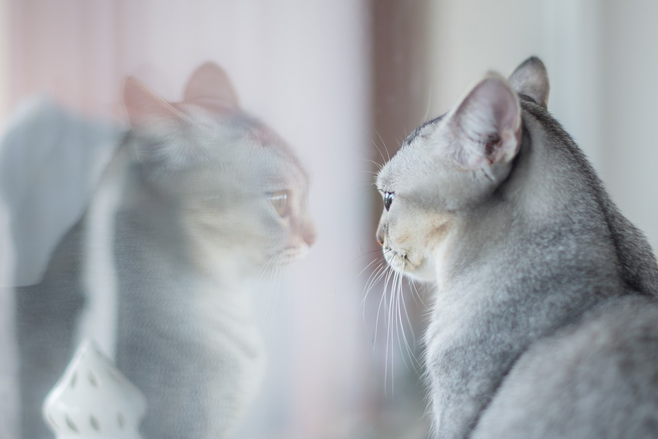 nombres para gatos segun su sexo luna