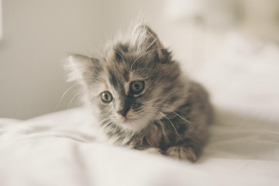 nombres para gatos y su significado eros