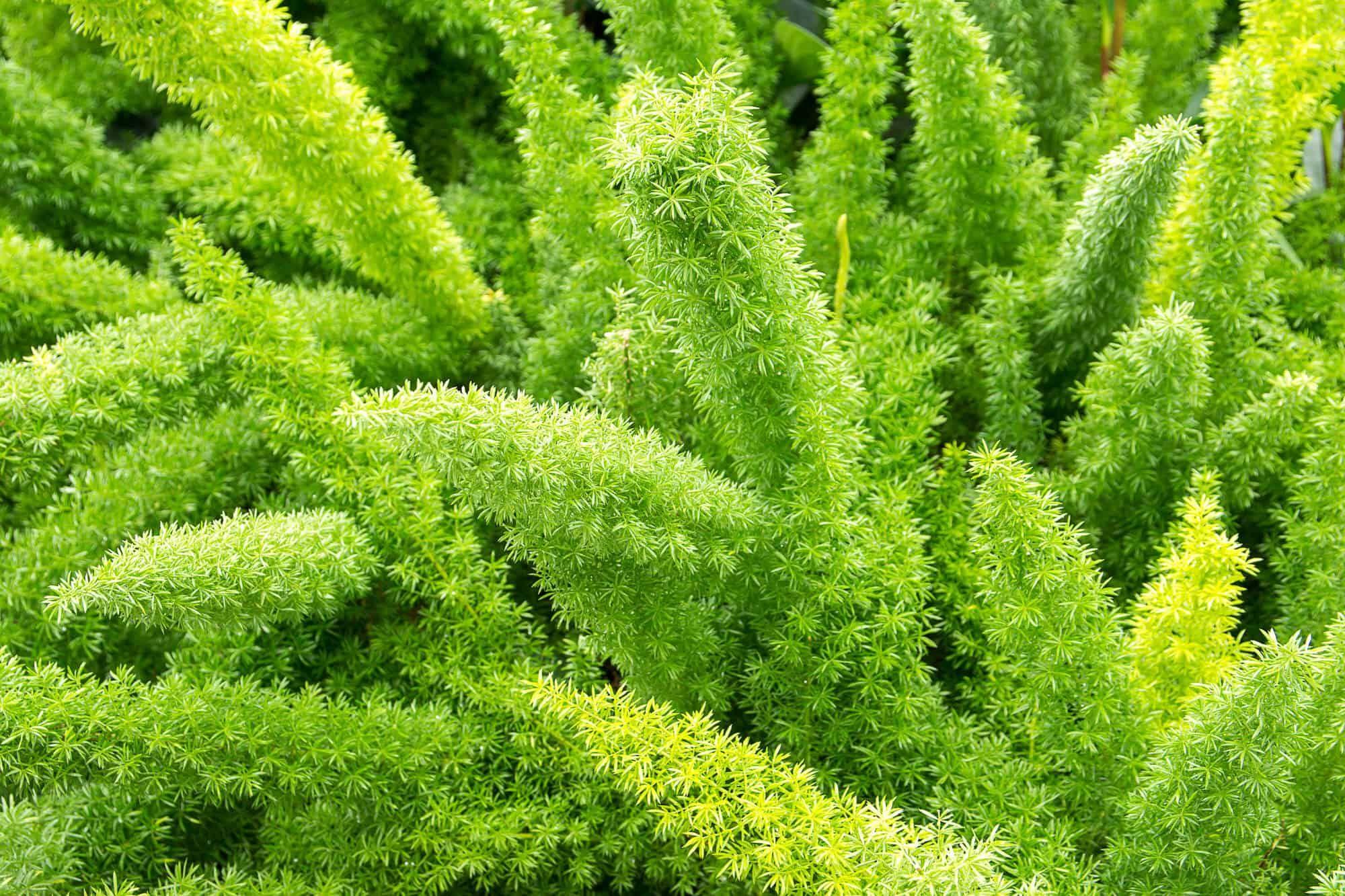 planta verde de interior 3